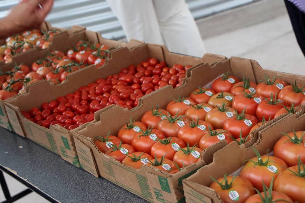 Marruecos y Holanda hacen la pinza comercial al tomate español para fresco en el mercado europeo