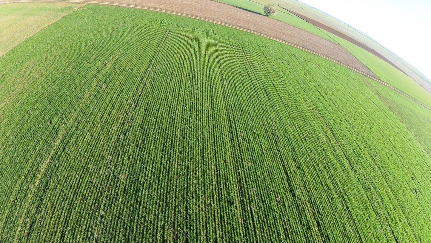 Agricultura prorroga hasta el 15 de junio el plazo de la PAC