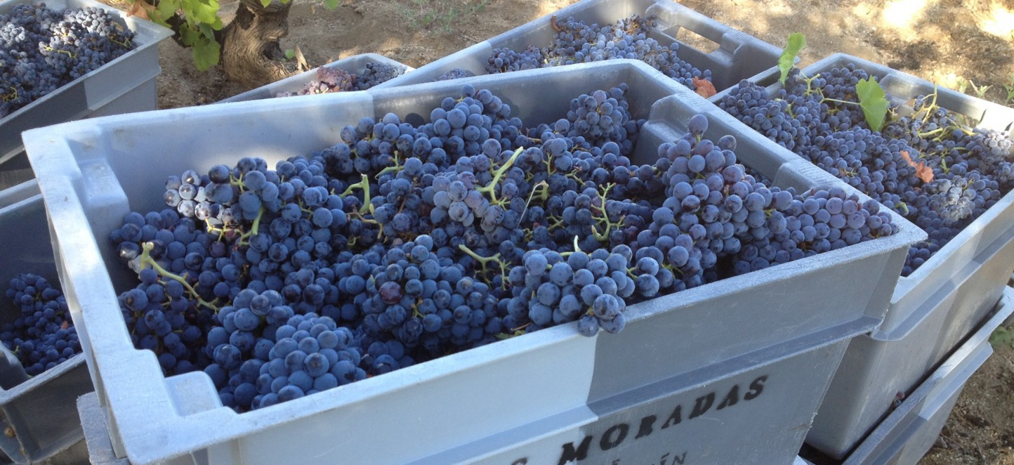 Cooperativas de Castilla-La Mancha promoverá un nuevo sistema de retribución de la uva
