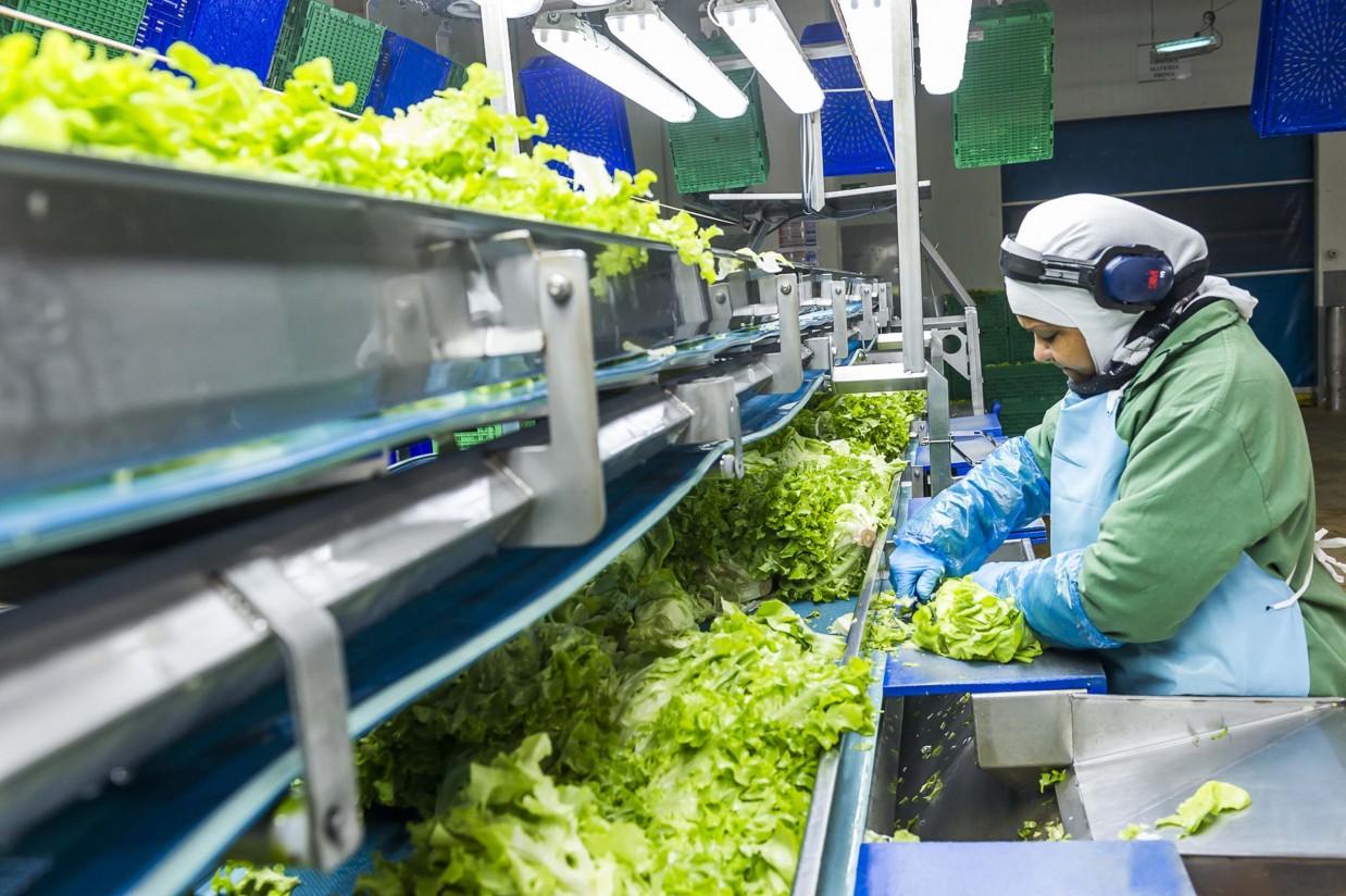 Grupo Alimentario Citrus (GAC) aumenta su facturación un 37,8% en 2015