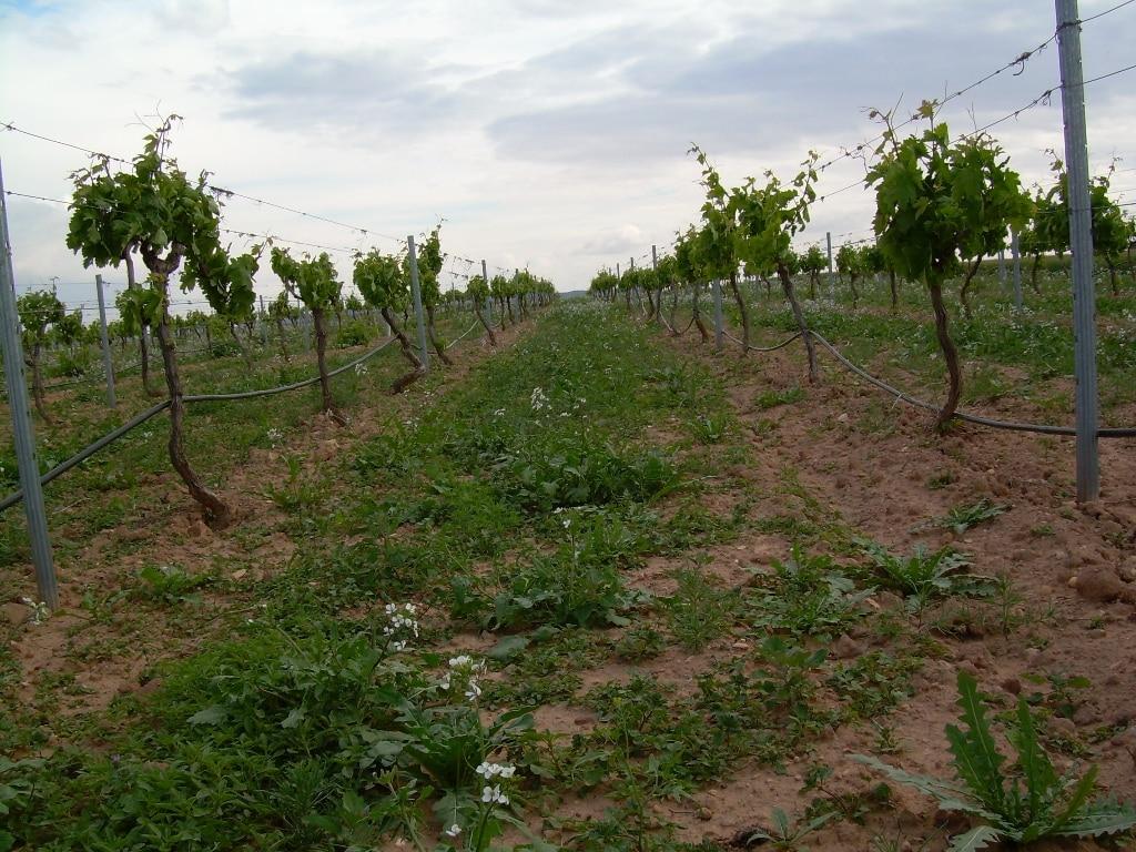 Nuevo Plan andaluz de Agricultura Ecológica, con cerca de 300 M€ hasta el año 2020