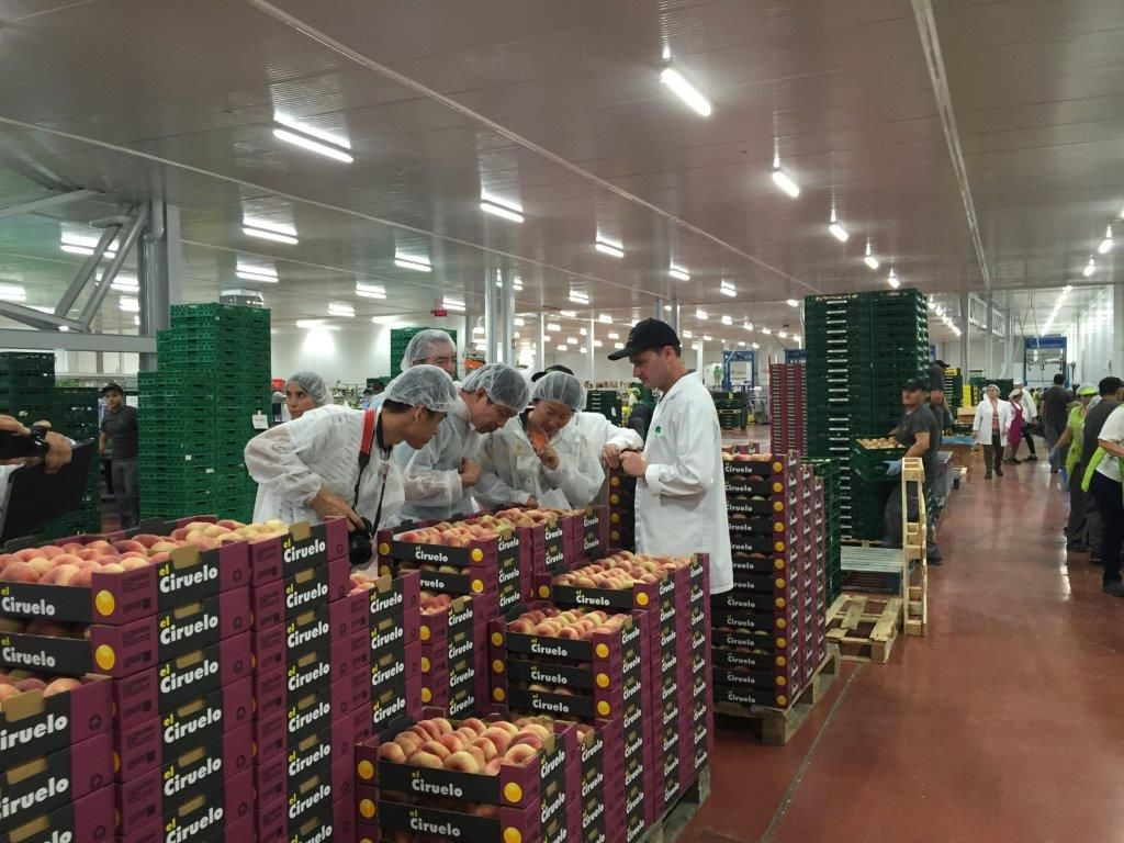 La exportación de fruta de hueso española a China mucho más cerca