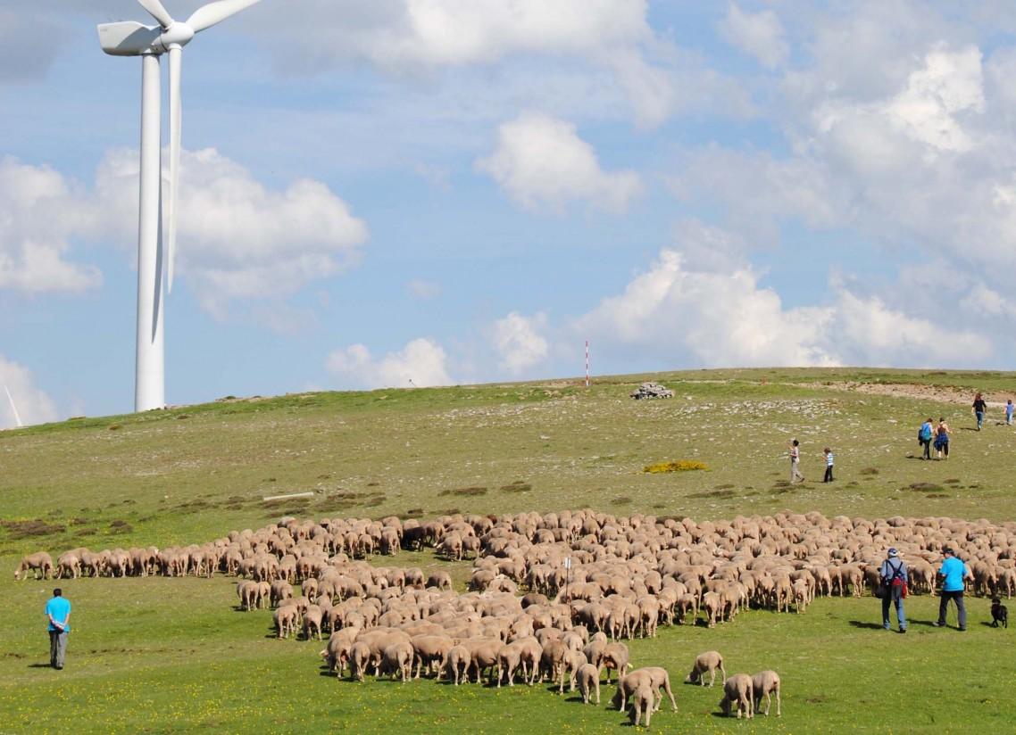 Aprender a ser pastor en las Tierras Altas de Soria