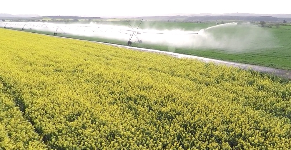 El sector productor y cooperativo prevé menos trigo blando y semillas oleaginosas en la UE en 2016/17