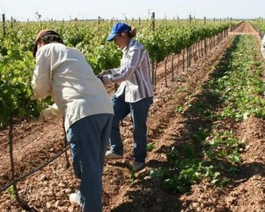 Dos nuevas cooperativas vitivinícolas de Ciudad Real se incorporan a Dcoop
