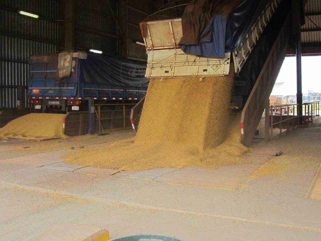 Bruselas autoriza el uso, pero no el cultivo en la UE de tres tipos de soja transgénica