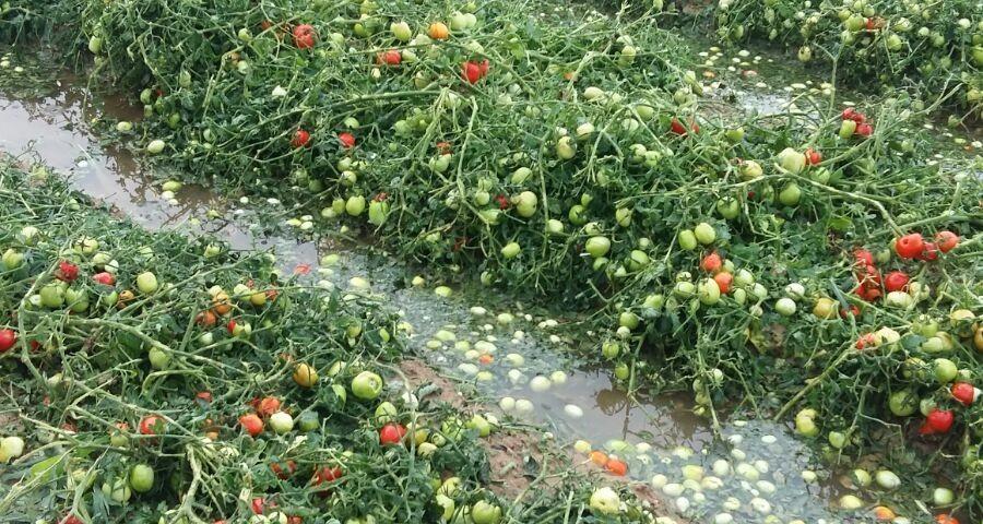 Tomates5 (FILEminimizer)