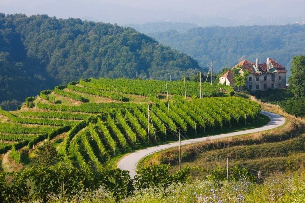 Las heladas primaverales podrían rebajar un 8%, hasta solo 44,1 Mhl la producción vitivinícola francesa