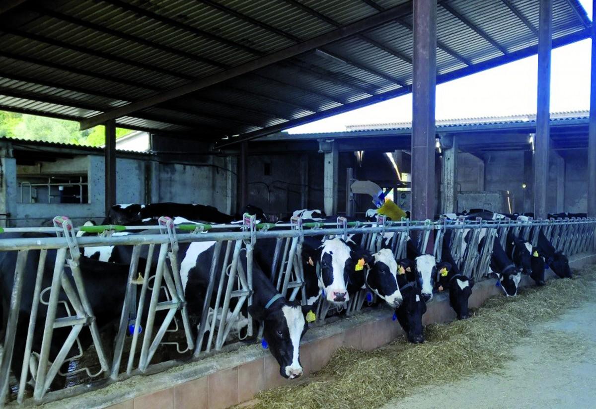 Gestión económica en explotaciones de vacas de leche