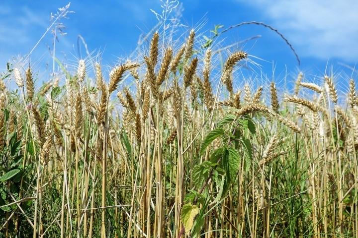 cereals-1508645_1920 (FILEminimizer)