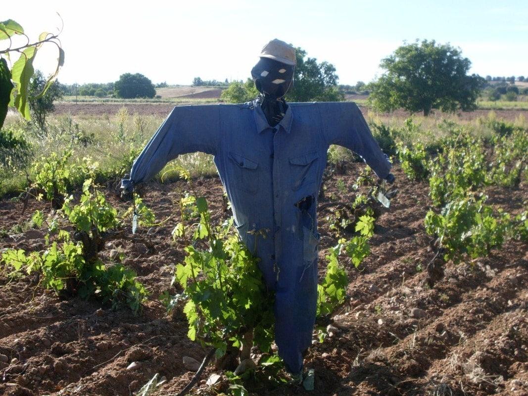 El sector  vitivinícola cuenta ya con extensión de norma a partir  de la nueva campaña 2016/17