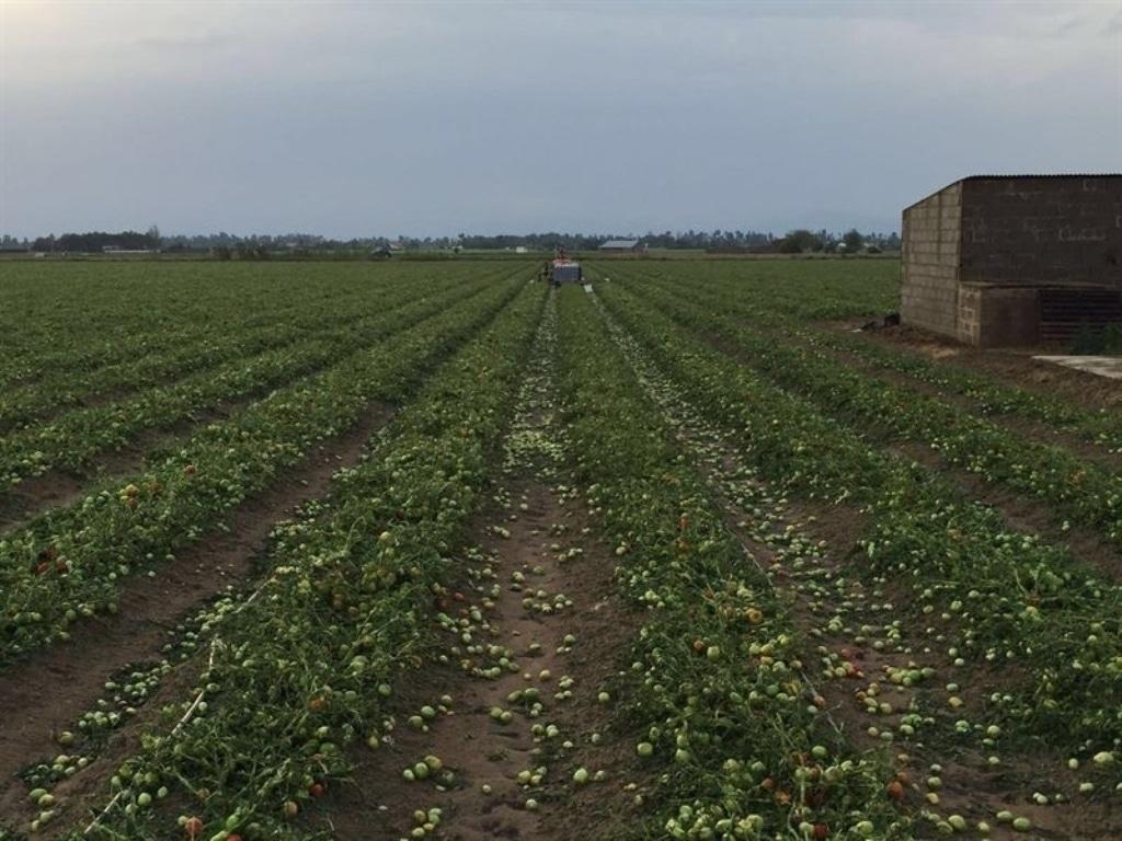 El Gobierno añade 15 M€ al Plan 2016 de Seguros Agrarios  por la mayor contratación de primas