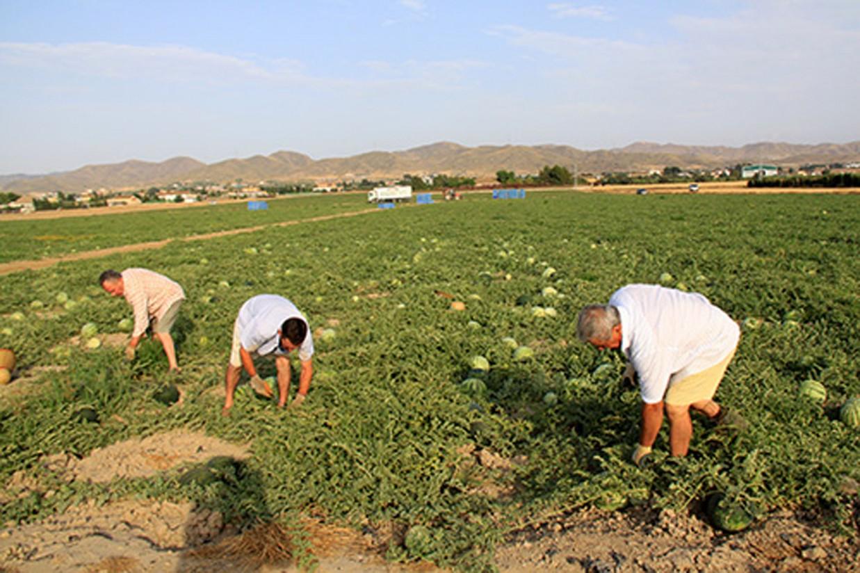 Los cambios en la figura del agricultor activo se deben a una denuncia de Unión de Uniones, según Agricultura