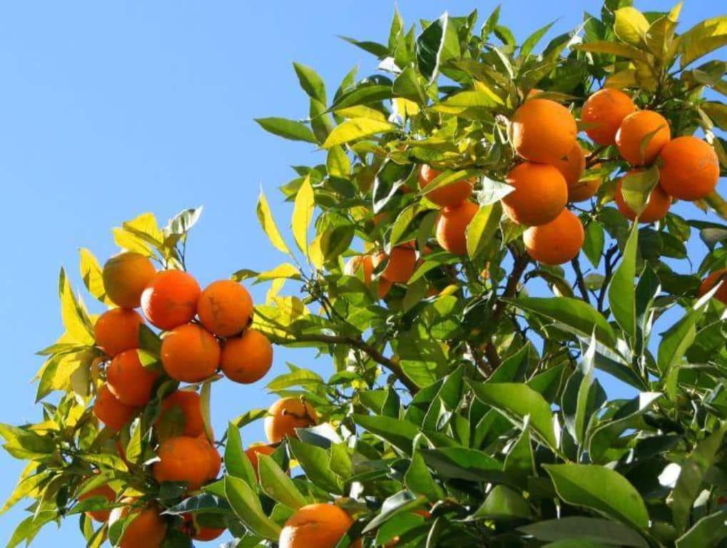 Vila-real acoge la II Jornada Innovagri sobre el Cultivo de los Cítricos
