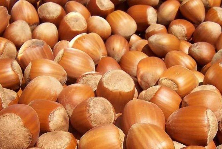 El DARP mejorará el  reglamento de la Lonja de Reus para dar más transparencia al mercado de frutos secos