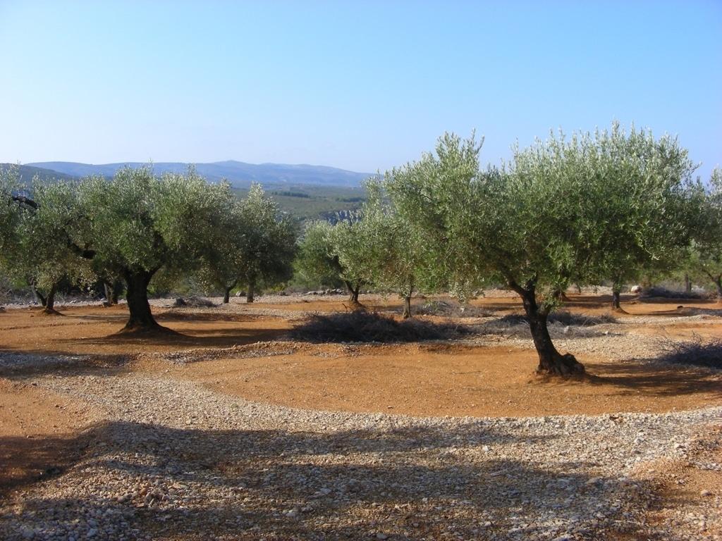 La campaña 2015/16 podría acabar con salidas al mercado de cerca de 1,4 Mt de aceite de oliva