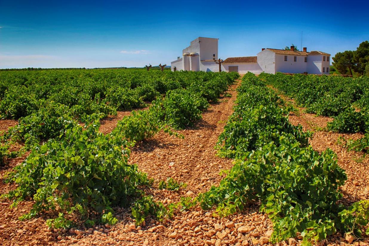 Las existencias vitivinícolas en poder de los operadores son inferiores a la media de las cuatro últimas campañas