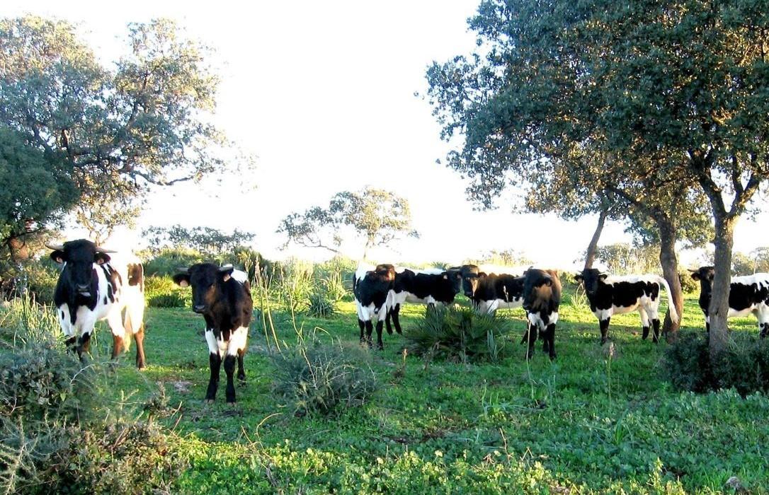 Vacaslecheras (FILEminimizer)