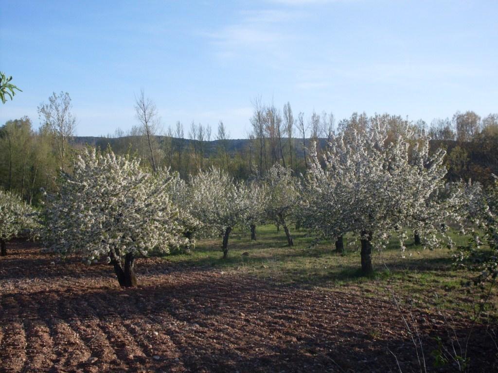 Los precios  medios de la tierra repuntaron un 3,2% y en 325 €/ha en 2015