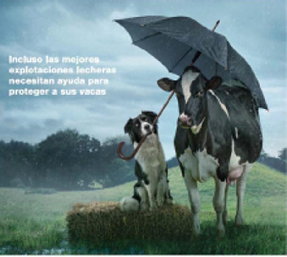 Elanco Animal Health lanza Imrestor para vacas lecheras y novillas