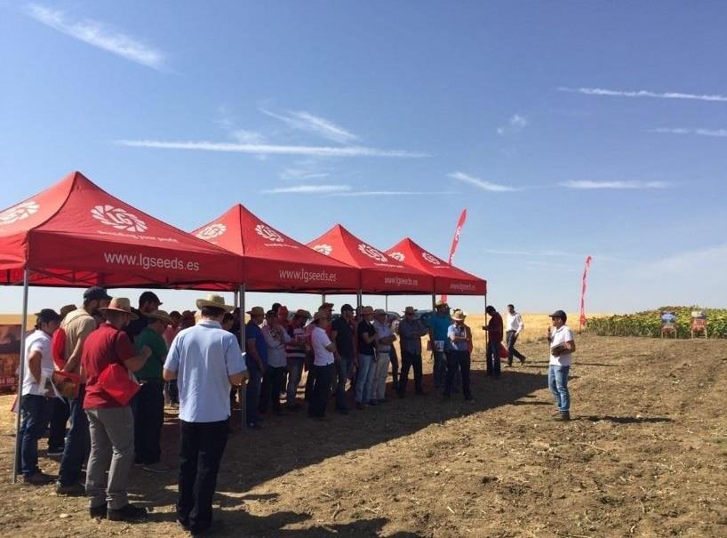 La plataforma tecnológica de girasol de Semillas LG recibe a más de 400 agricultores