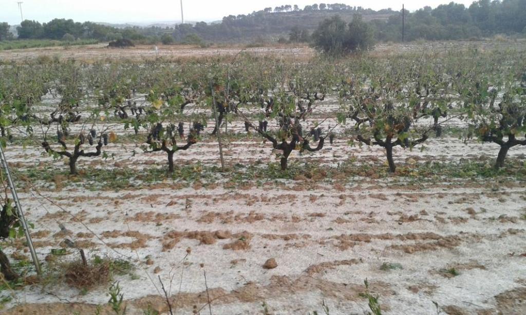 Más de 1.386 ha de cultivos leñosos dañadas por  el granizo en la comarca catalana de la Terra Alta