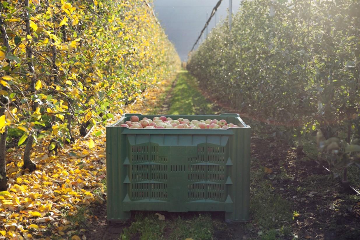 Interpoma: la producción española del manzana, al alza
