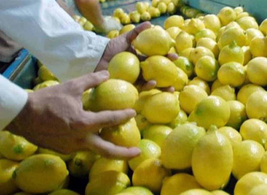 Empresas citrícolas argentinas se vuelcan para exportar limones al mercado asiático