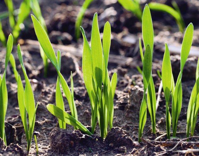 Los fertilizantes, un input básico para el desarrollo de la producción vegetal. Por Jaime Lamo de Espinosa
