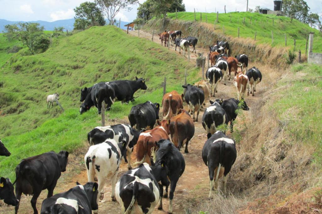 Bruselas solo dará ayuda a 12.463 kg de leche por cada 100.000 kg de recorte solicitado
