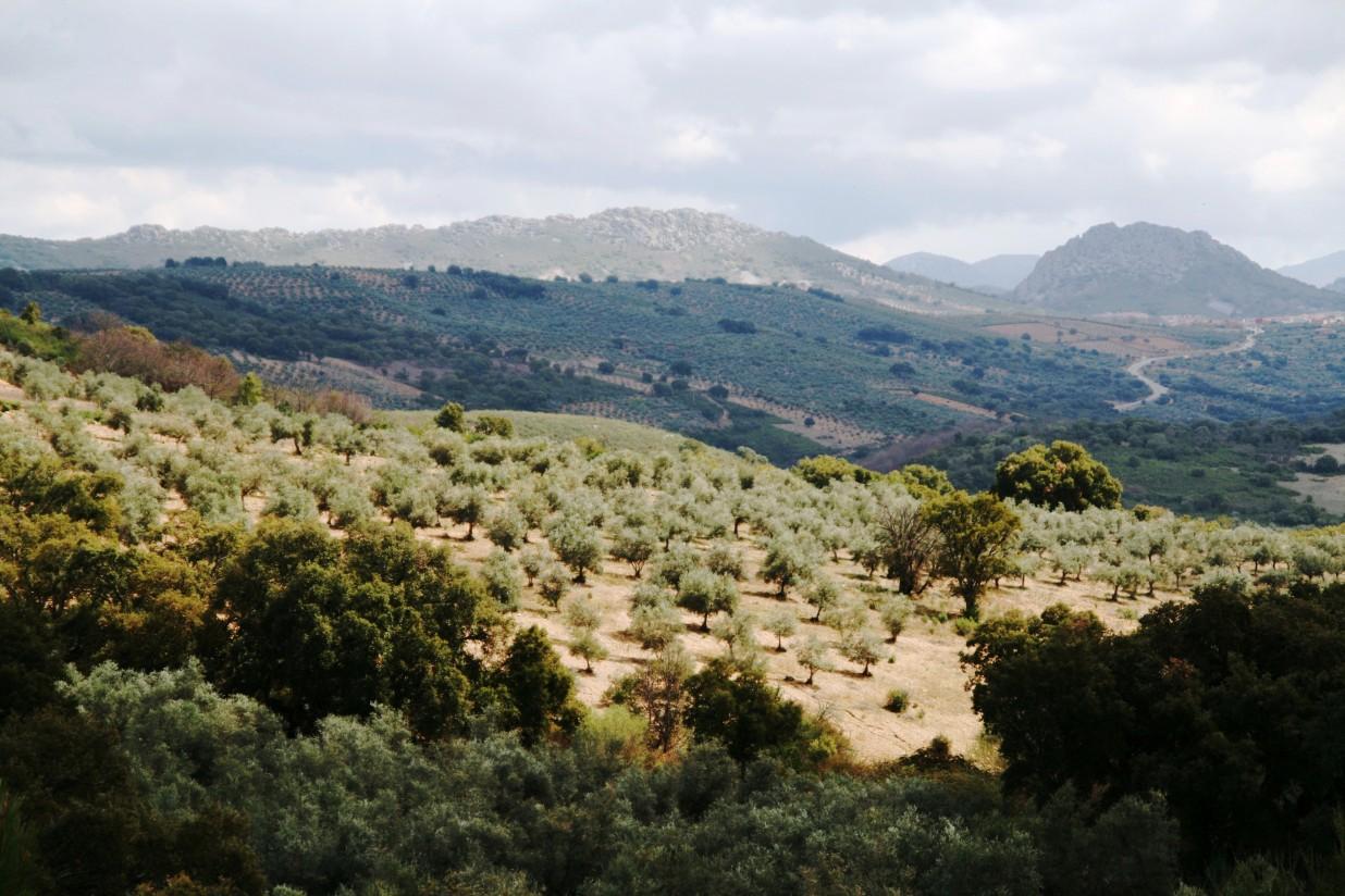 SEO/BirdLife denuncia la existencia de dehesas extremeñas amenazadas por cultivos irregulares y solicitudes de tala