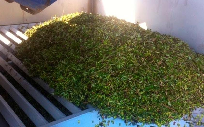 Las ventas de aceite de oliva se enfriaron un poco en el mes de septiembre