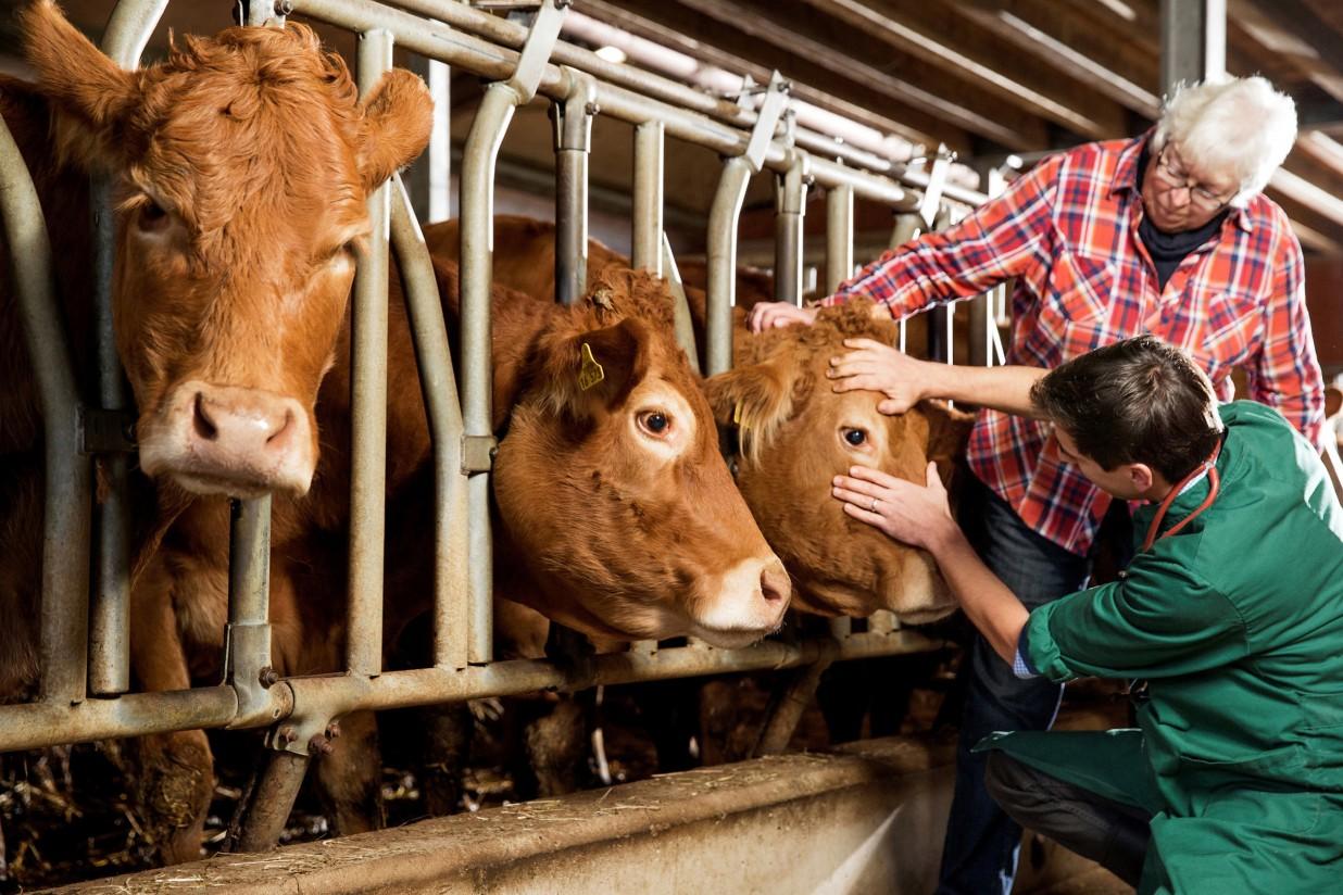 Los medicamentos veterinarios contribuyen a aumentar la seguridad alimentaria
