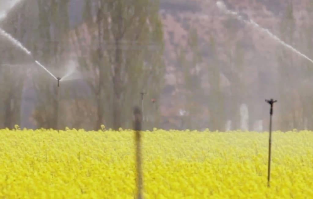 Oposición agraria a la supresión gradual de los biocombustibles convencionales en la UE