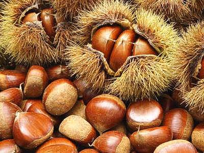 II Jornada de arboricultura forestal: producción de frutos
