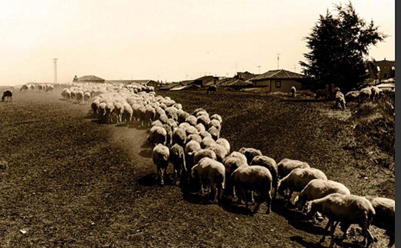 Interovic convoca un concurso sobre la sostenibilidad del sector ovino y caprino