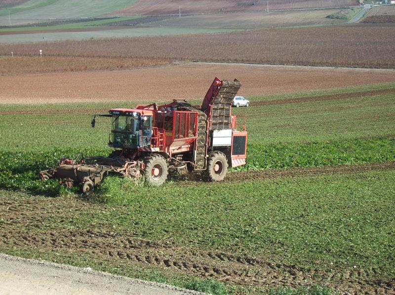 Castilla y León tratará de revertir la tasa sobre el azúcar en defensa del cultivo remolachero