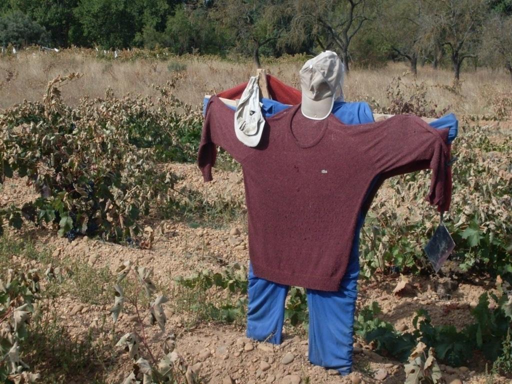 Una encuesta del COPA-Cogeca y Eurostat confirman la difícil situación de los agricultores de la UE en 2016