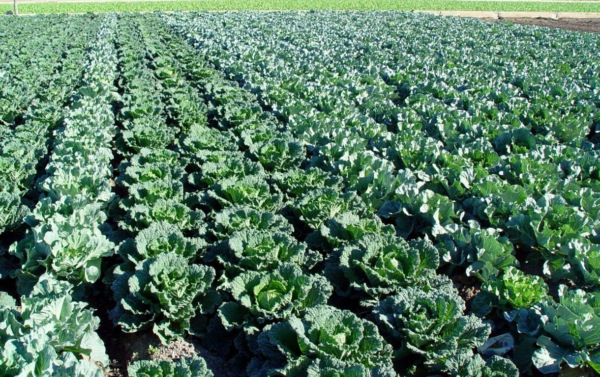 España se confirma como el proveedor más fiable en mitad de la crisis de oferta de hortalizas en la UE