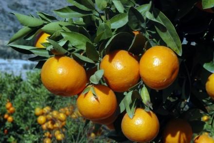 naranjas (FILEminimizer)