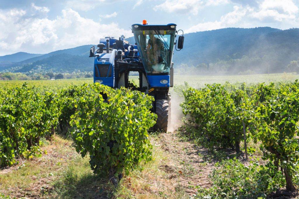 Moderada producción vitivinícola de 42,54 Mhl en la presente campaña 2016/17