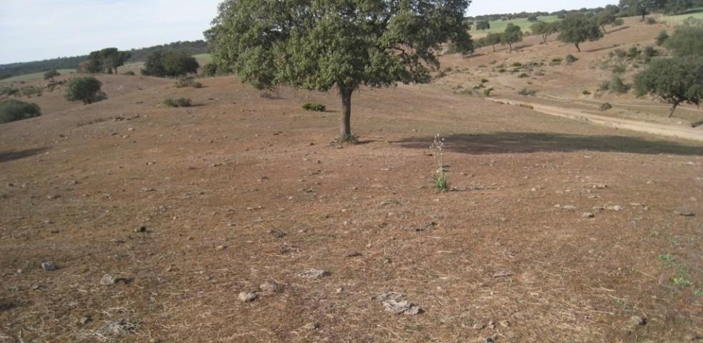 Dehesa totalmente seca a causa de la sequía (FILEminimizer)