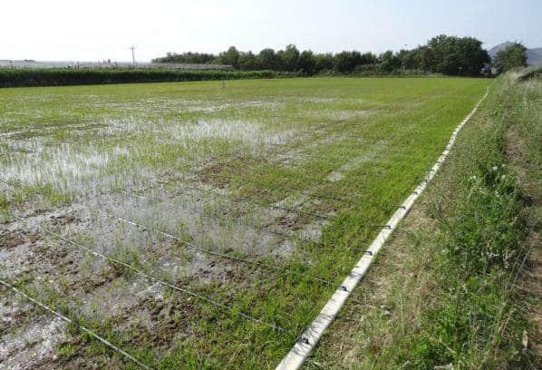 Jornada de Innovaciones técnicas y gestión en el cultivo del arroz