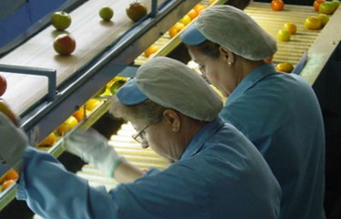exportacion-importacion-españolas-frutas-hortalizas