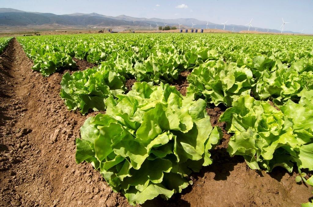 Primaflor cierra el año con una facturación de 160 M€ (+8%) y 150.000 t de volumen de producción de vegetales frescos