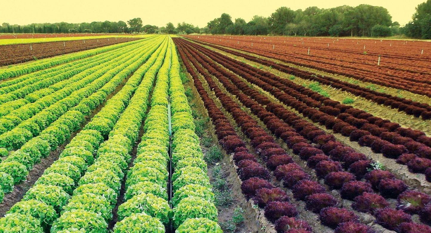 Cajamar reúne a los expertos en producción de hortalizas al aire libre en un nuevo libro