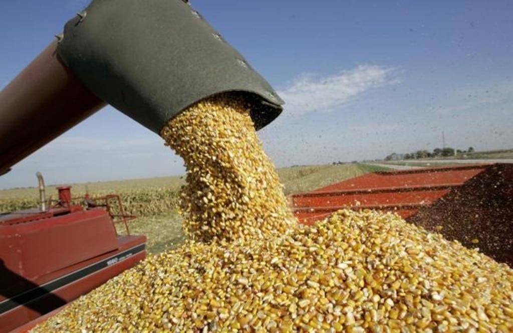 El maíz representa en 2016/17 la mitad de la producción y del consumo mundial de cereales