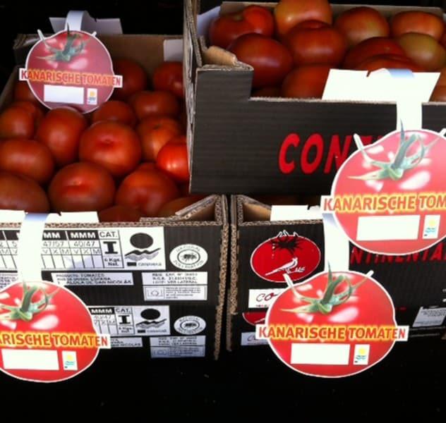 tomatte canario exportado