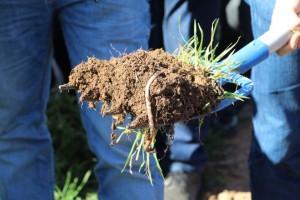 2.- Imagen de la riqueza del suelo de la viña Dehesa Los Llanos con cubierta vegetal (FILEminimizer)
