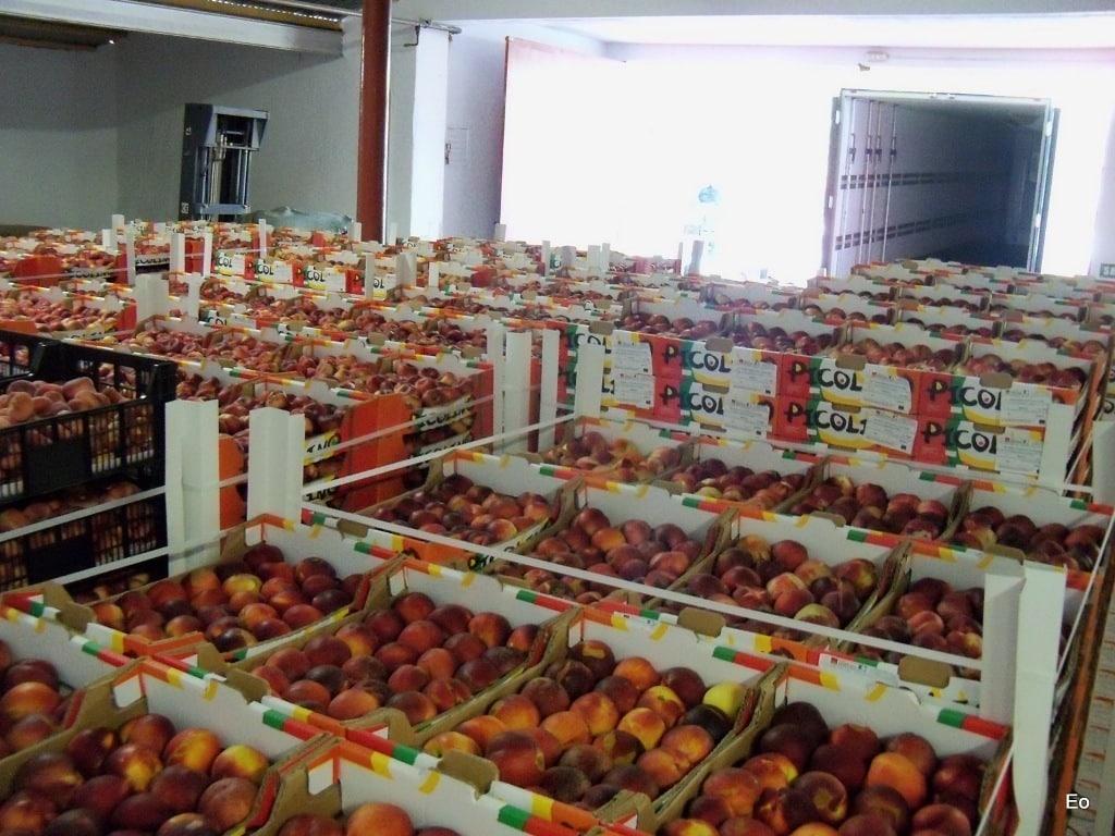Bruselas aprueba la nueva normativa sobre las OP de frutas y hortalizas en la Unión Europea